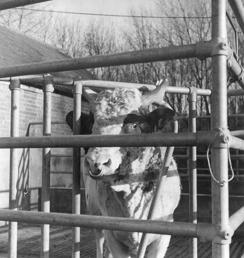Kee Klamp: Verbinder wurden vor 80 Jahren für die Tierzucht entwickelt